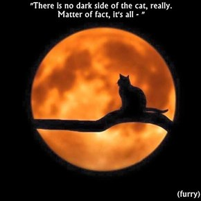 """There is no dark side of the cat, really.                                                    Matter of fact, it's all - ""  (furry)"
