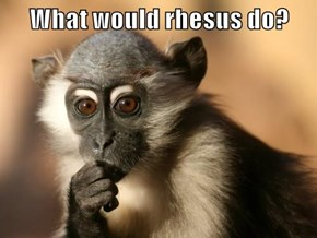What would rhesus do?