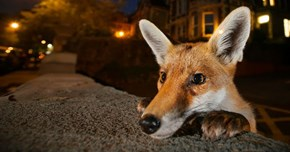 Here's Your First Look at the Wildlife Photographer of the Year Award Nominees for 2016