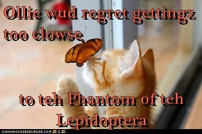 Ollie wud regret gettingz too clowse  to teh Phantom of teh Lepidoptera