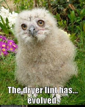 The dryer lint has... evolved.