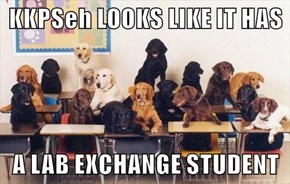 KKPSeh LOOKS LIKE IT HAS   A LAB EXCHANGE STUDENT