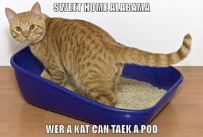 SWEET HOME ALABAMA  WER A KAT CAN TAEK A POO