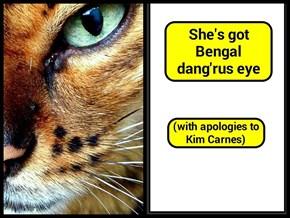 She's got Bengal dang'rus eye (recaption: http://tinyurl.com/j9c6jbv