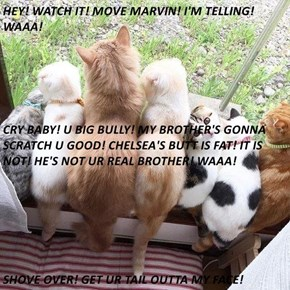 HEY! WATCH IT! MOVE MARVIN! I'M TELLING! WAAA! CRY BABY! U BIG BULLY! MY BROTHER'S GONNA SCRATCH U GOOD! CHELSEA'S BUTT IS FAT! IT IS NOT! HE'S NOT UR REAL BROTHER! WAAA! SHOVE OVER! GET UR TAIL OUTTA MY FACE!