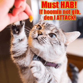 Must HAB!