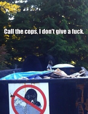Don't Mess With Bears