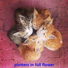 plotters in full flower
