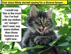 Ever since Misty started spying for a divorce lawyer... (recaption: http://tinyurl.com/hs64t2l