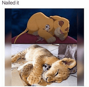 The Lion King IRL
