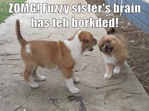 ZOMG! Fuzzy sister's brain has teh borkded!