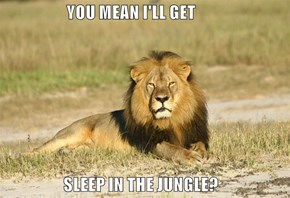 YOU MEAN I'LL GET                     SLEEP IN THE JUNGLE?
