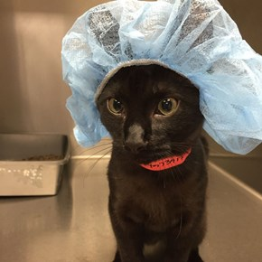 Vet sent us this picture of our kitten before he got neutered