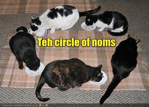 Teh Circle of Nomz