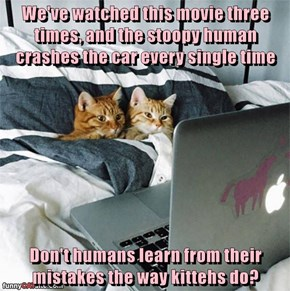 We've watched this movie three times, and the stoopy human crashes the car every single time  Don't humans learn from their mistakes the way kittehs do?