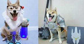 These Are All the Overwatch Doggos So Far