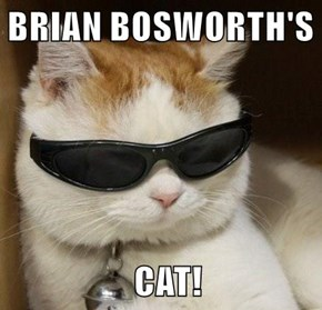 BRIAN BOSWORTH'S                     CAT!