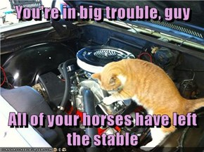 You're in big trouble, guy  All of your horses have left the stable