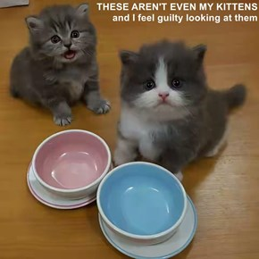 THESE AREN'T EVEN MY KITTENS                                                                     and I feel guilty looking at them