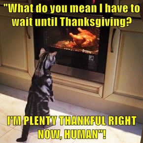 """What do you mean I have to wait until Thanksgiving?  I'M PLENTY THANKFUL RIGHT NOW, HUMAN""!"