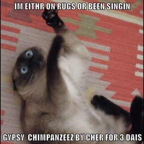 IM EITHR ON RUGS OR BEEN SINGIN  GYPSY  CHIMPANZEEZ BY CHER FOR 3 DAIS