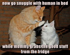 now go snuggle with human in bed  while mommy grabs the good stuff from the fridge