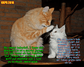 Momma cats across teh country talk to der childrens about dat missing Mischief an' urges dem to stay homes wiff der mommie..