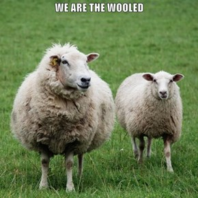 WE ARE THE WOOLED