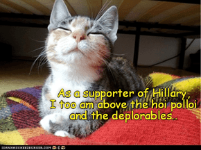 Superior kittie knows she is superior!