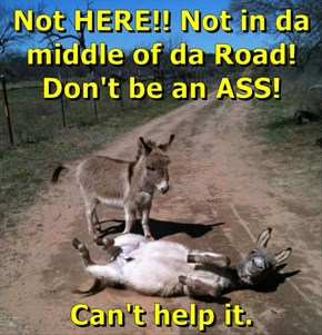Not HERE!! Not in da middle of da Road! Don't be an ASS!  Can't help it.