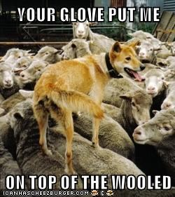 YOUR GLOVE PUT ME  ON TOP OF THE WOOLED
