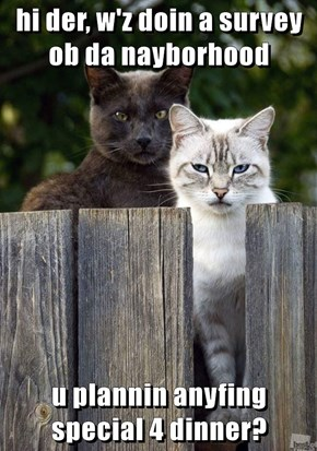 The Neighborhood Watch Cats Are On The Job