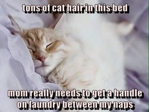 tons of cat hair in this bed  mom really needs to get a handle on laundry between my naps