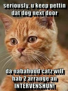 seriously, u keep pettin dat dog next door  da nabahood catz will hab 2 arrange an INTERVENSHUN!