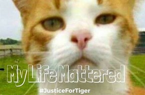 http://www.lifewithcats.tv /2016/08/22/judges-recomme nd-cat-killing-vet-have-li cense-suspended-five-years/