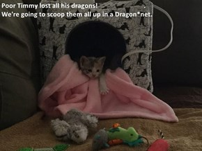 Poor Timmy lost all his dragons!                            .                                               We're going to scoop them all up in a Dragon*net.