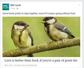 It's All Pun and Games Until Both Birds Go Hungry
