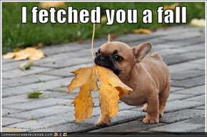 I fetched you a fall