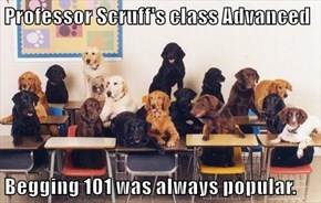 Professor Scruff's class Advanced   Begging 101 was always popular.
