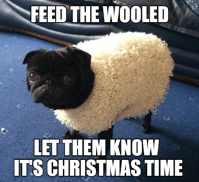 Throw your arms around the wooled