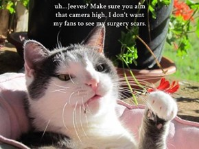 uh...Jeeves? Make sure you aim                                                                             that camera high, I don't want                                                                 my fans to see my surgery scars.