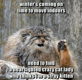 winter's coming on                                                               time to move indoors  need to find                                                                                    a nearsighted crazy cat lady                     who thi