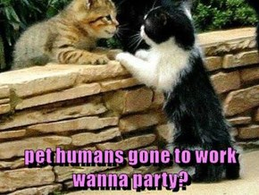 pet humans gone to work                     wanna party?
