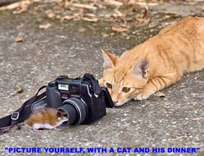 """PICTURE YOURSELF, WITH A CAT AND HIS DINNER"""