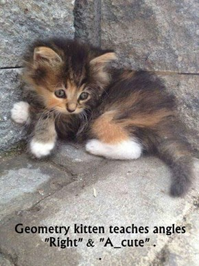 "Geometry kitten teaches angles                                                                               ""Right"" & ""A_cute"" .                                                                                 ."