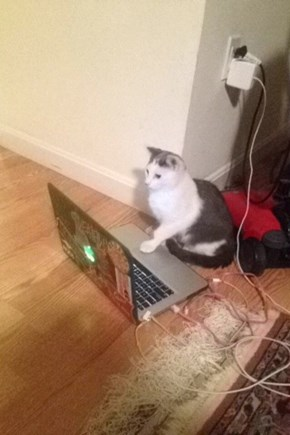 On the Internet Nobody Knows You're a Cat