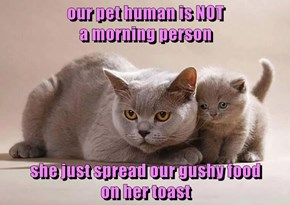 our pet human is NOT                                        a morning person  she just spread our gushy food                                         on her toast