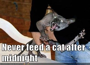 Never feed a cat after midnight
