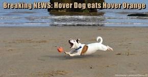Breaking NEWS: Hover Dog eats Hover Orange