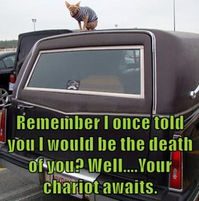 Remember I once told you I would be the death of you? Well....Your chariot awaits.